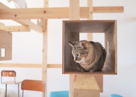 【保護猫活動支援】巾着セット「とらきちver.」  ※2個まで