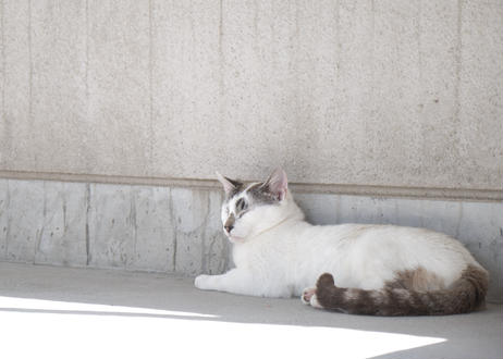 【保護猫活動支援】巾着セット「とらきちver.」