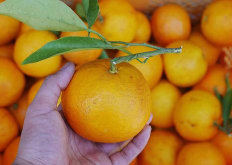 なるとオレンジのジャム【pure】or【spice】
