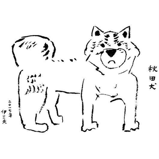 秋田犬 akitainu