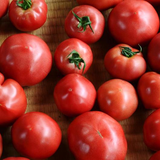 東峰村 小石原産 トマト 約16個〜24個