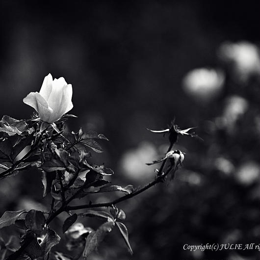 JULIE's Photo Monochrome-263