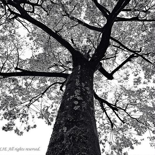 JULIE's Photo Monochrome-235