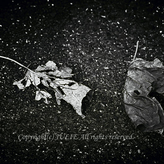 JULIE's Photo Monochrome-201
