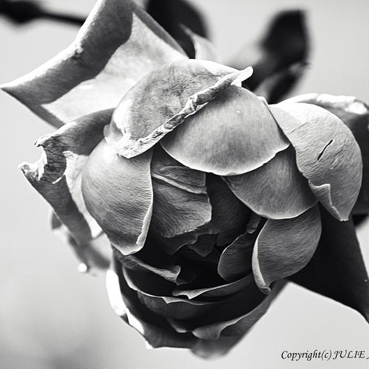 JULIE's Photo Monochrome-262