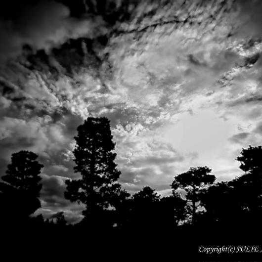 JULIE's Photo Monochrome-304