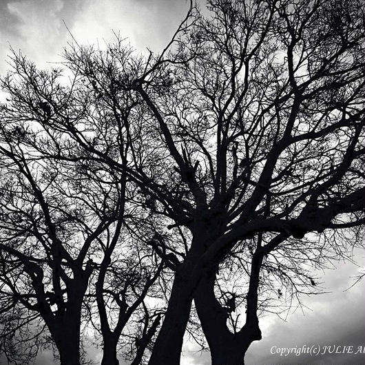 JULIE's Photo Monochrome-266