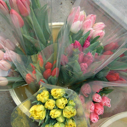 チューリップ切花贈答用20本入り