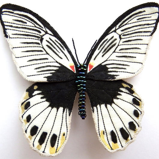 ナガサキアゲハ agenor亜種(ブローチ)