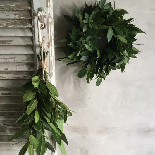 Bay Leaf Wreath & Swag (月桂樹のリース&スワッグ)