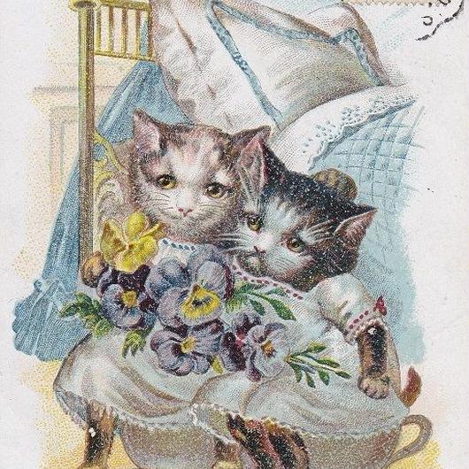 妹猫のお世話をするお姉さん猫のポストカード