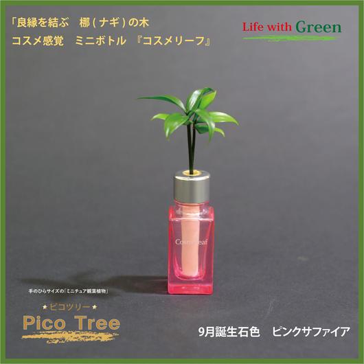 「セラハイト」 ミニチュア観葉植物「ピコツリー ナギの木」コスメ感覚ミニボトル「コスメリーフ 9月誕生石色 ピンクサファイア」付き