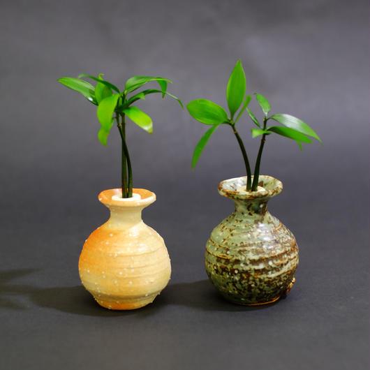 土なし 清潔 水やり簡単 セラハイト 良縁を結ぶ『梛(ナギ)の木』と信楽焼つぼ 2個セット