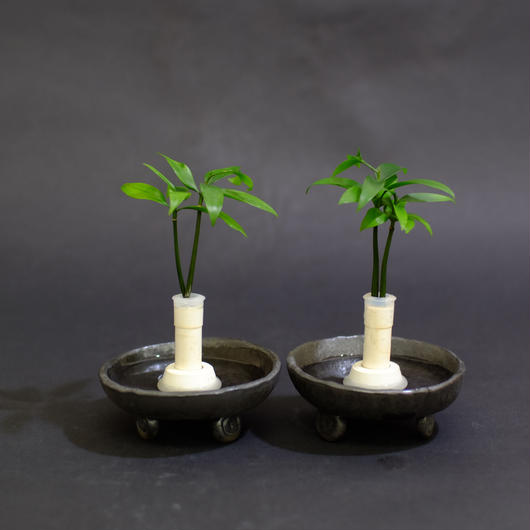 土なし 清潔 水やり簡単 良縁を結ぶ梛(ナギ)の木と 陶房「うさぎ庵」特製『巻渦三脚皿』 2個セット スタンドタイプ