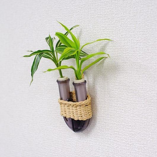 植物を壁に掛けて楽しむ セラハイト ドラセナ・サンデリアーナ ゴールドとビクトリー 壁掛け用容器 『Cibi (シビ) 』 手づくり製 籐製カバー付き