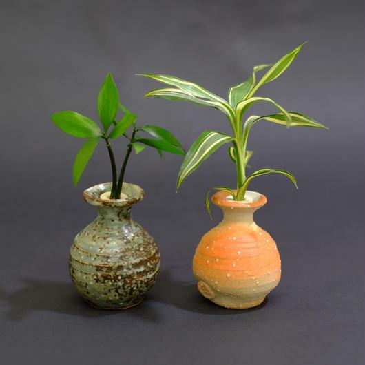 土なし 清潔 水やり簡単 セラハイト 良縁を結ぶ『梛(ナギ)の木』と『ドラセナ・サンデリアーナ・ビクトリー』 信楽焼つぼ 2個セット