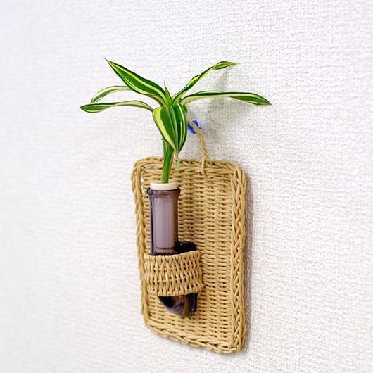 植物を壁に掛けて楽しむ セラハイト ドラセナ・サンデリアーナ ビクトリー 壁掛け用容器 『Cibi (シビ) 』 手づくり製 籐製カバー付き