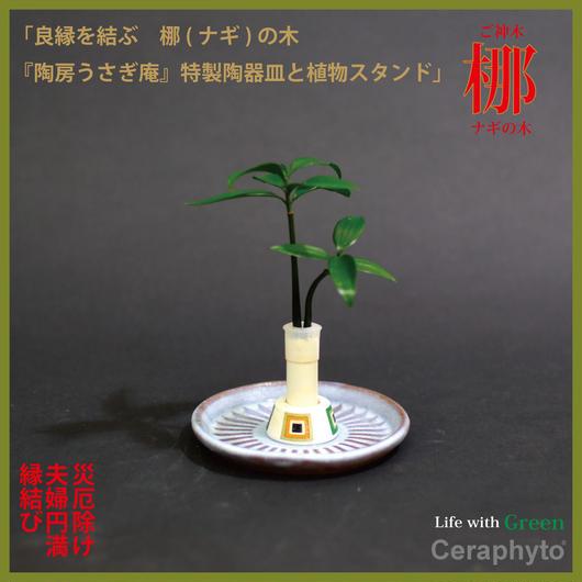 セラハイト ご神木 ナギの木 陶房「うさぎ庵」特製皿と植物スタンド 1個セット
