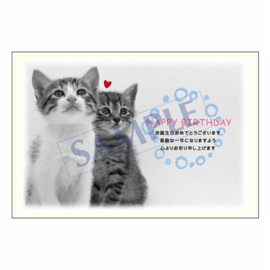 メッセージカード バースデー 11-0533 1セット(10枚)