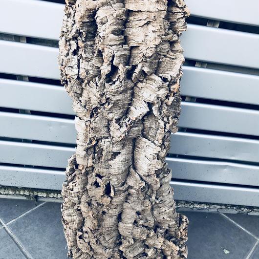 コルクの木片