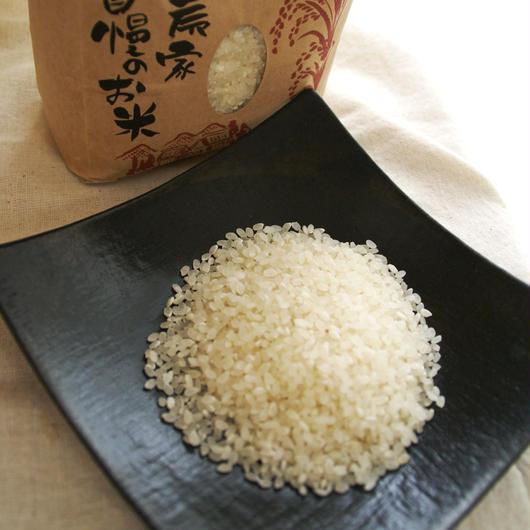 特別栽培米コシヒカリ白米5㎏/千葉県山武市