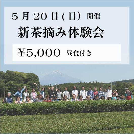 5月20日(日) 新茶摘み体験会