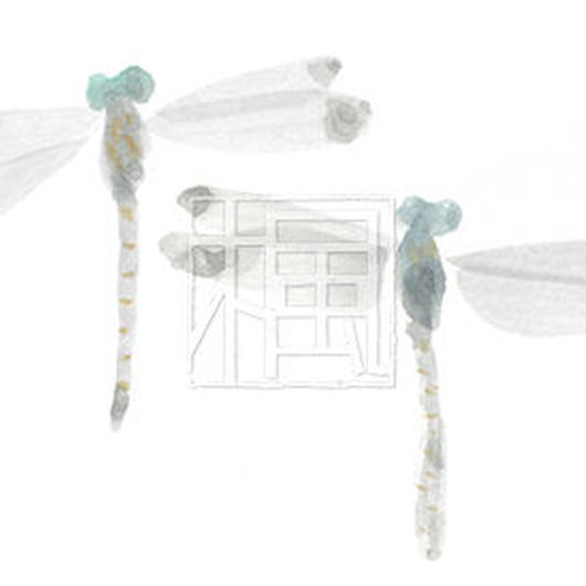 Dragonfly[jpg]