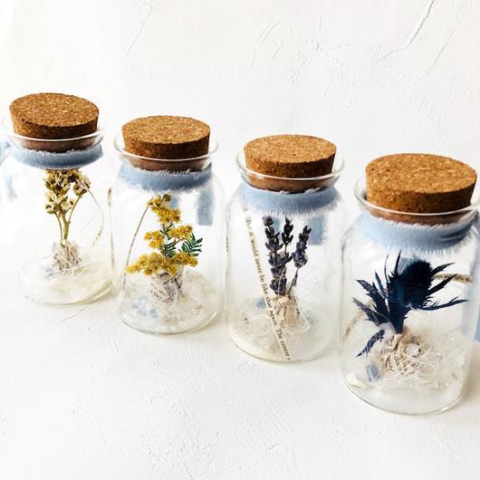 鉱石星花の球根の小瓶