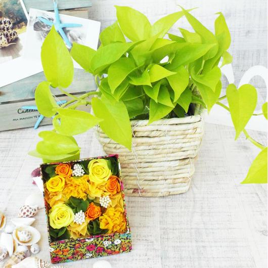 Summer gift/プリザーブドローズのboxアレンジメント 【orange】とライムポトスのセット