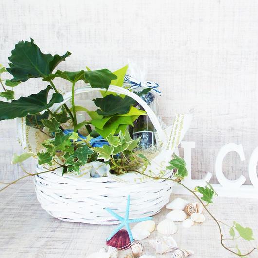 Summer gift/ミニ観葉3点とフレッシュウォーターセット