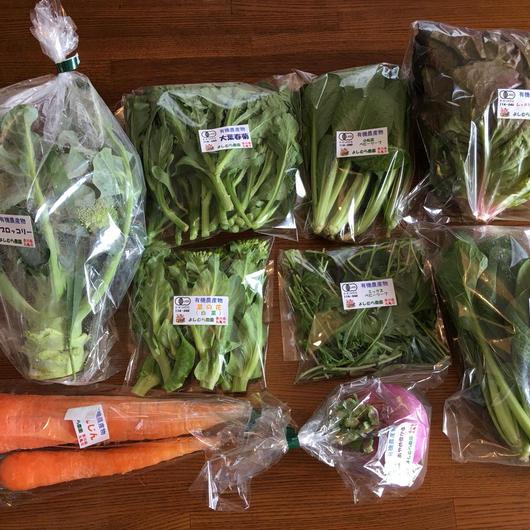 有機野菜セット ライトコース