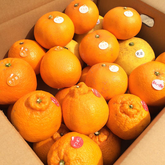 【6kg】旬の晩柑 味くらべセットD(5種)