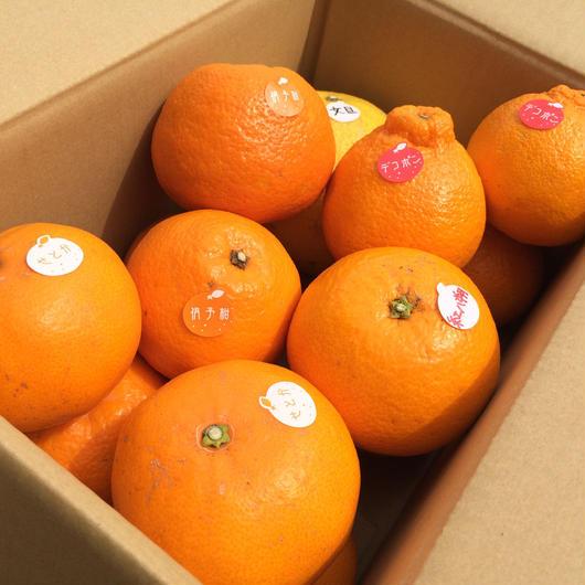 【3kg】旬の柑橘味くらべセットD(5種)