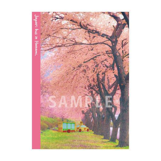 【がーでん 花見(第二弾)】クリアファイル_さくら