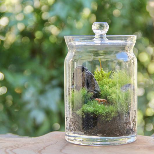 森の虎(Pot)