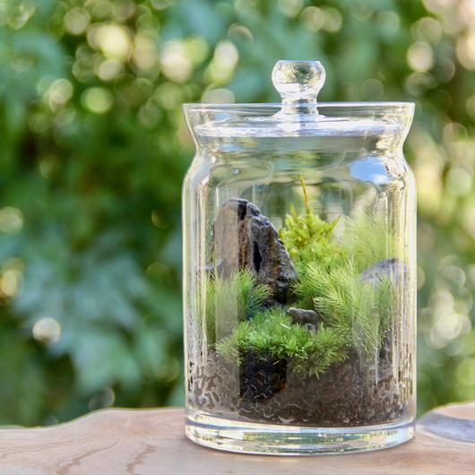 森の熊(Pot)