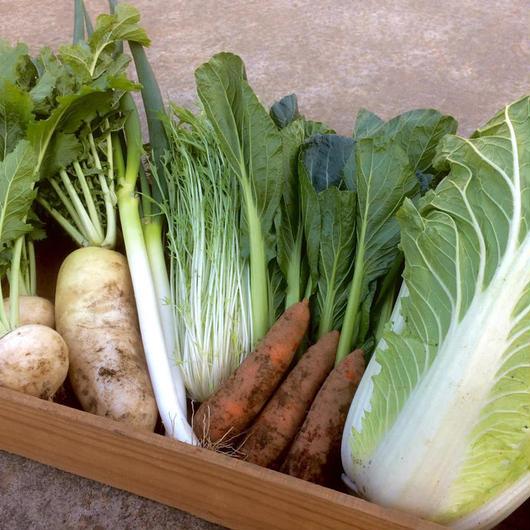 【鍋にオススメ♪】冬野菜セット