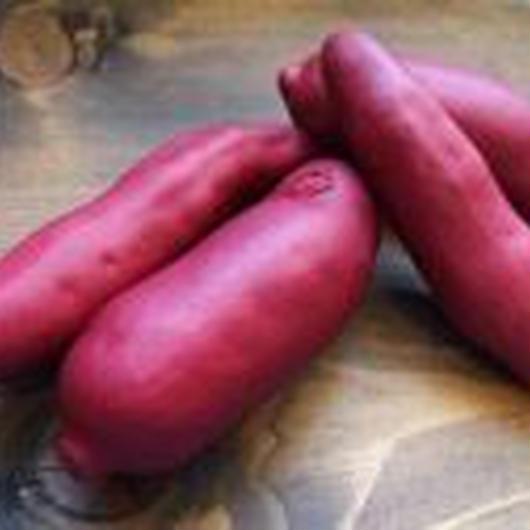 サツマイモ(2ヶアソート/袋)