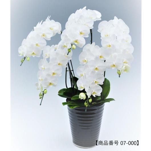 【中輪系】ミディ胡蝶蘭5本立て     =ホワイト=