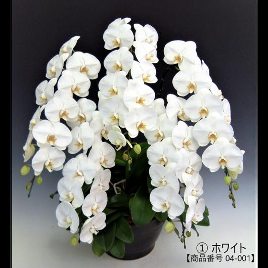 ★ハイグレード★ 大輪胡蝶蘭  5本立て   =ホワイト=