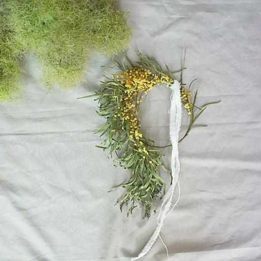 Acacia retinodes wreath C