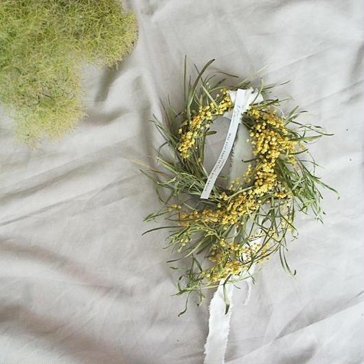 Acacia retinodes wreath D