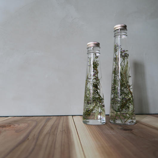 植物標本 / Herbarium    Size : M