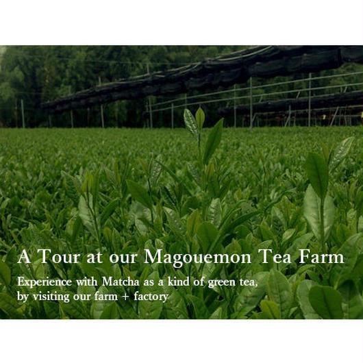 A Tour at our Magouemon Tea Farm