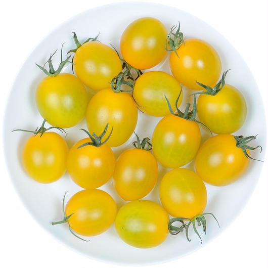 -井出トマト農園- ミニトマト イエローアイコ