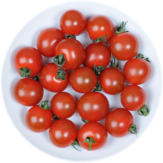 -井出トマト農園- ミニトマト キャロルクィーン