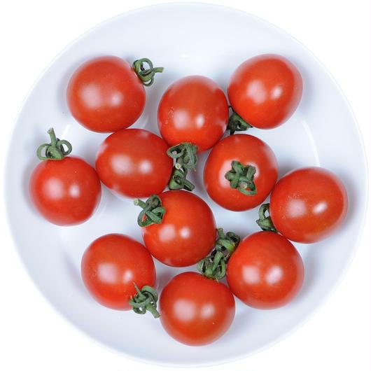 -井出トマト農園- ミニトマト ピッコラルージュ