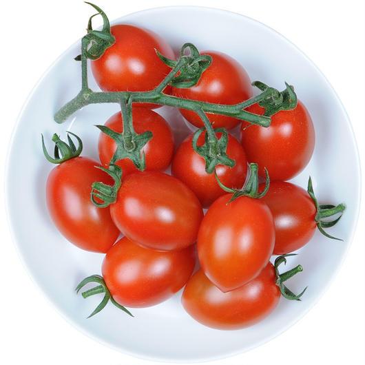 -井出トマト農園- ミニトマト リリアーナ