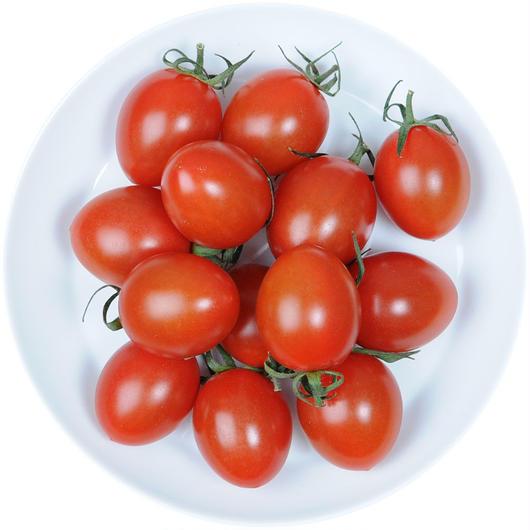 -井出トマト農園- ミニトマト アイコ