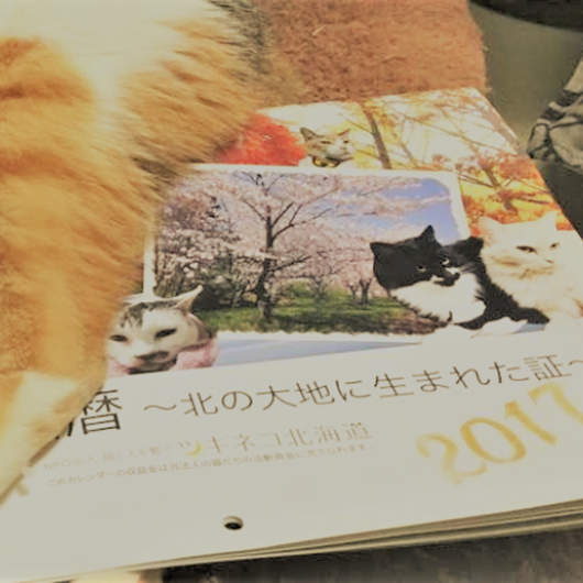 【NPO法人ツキネコ北海道】オリジナル壁掛けカレンダー2017